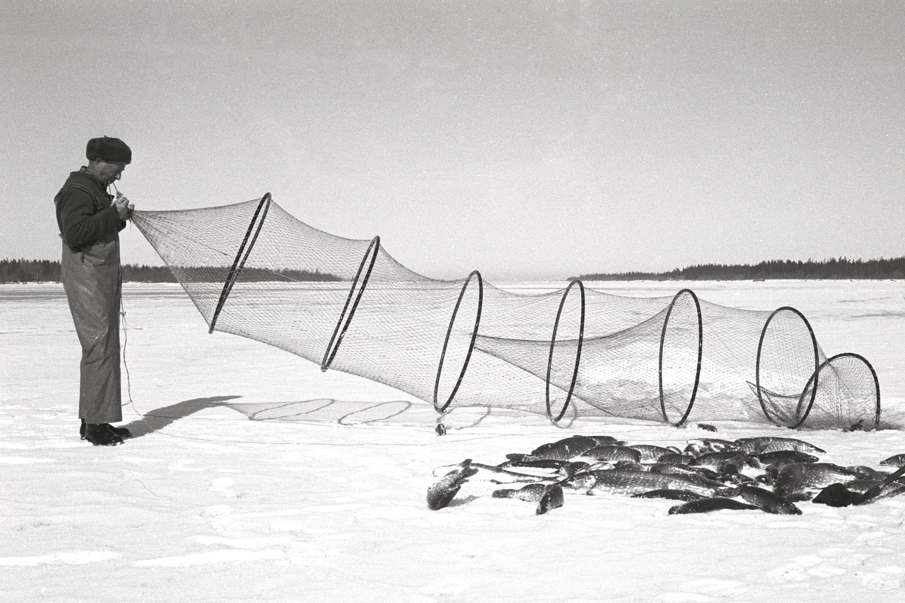 Fishing pike with fyke net.