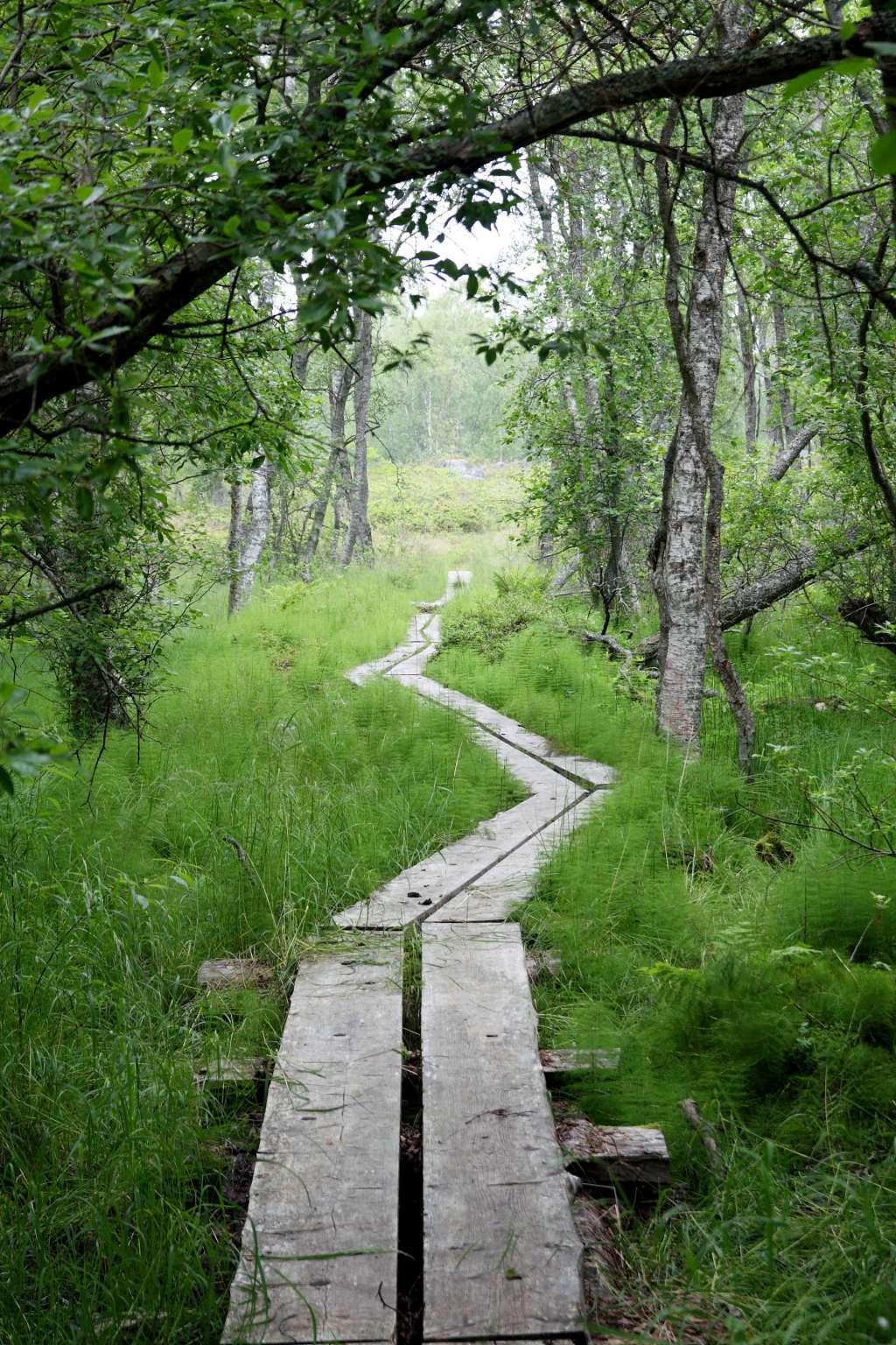 Valassaarten luontopolulla koet erilaisia maisemia rehevästä metsästä karuun kanervikkoon.