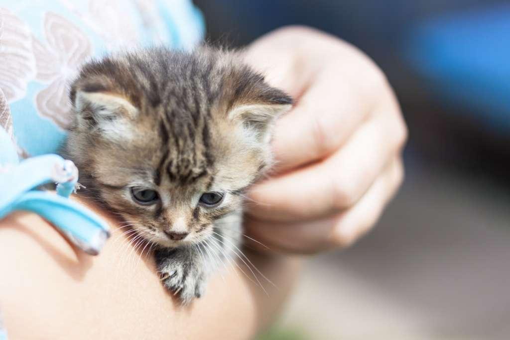 Kissa sylissä