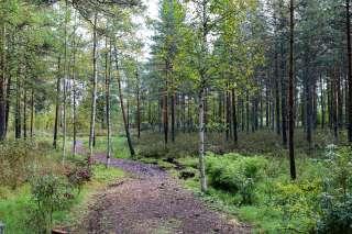 Alppiruusun puisto