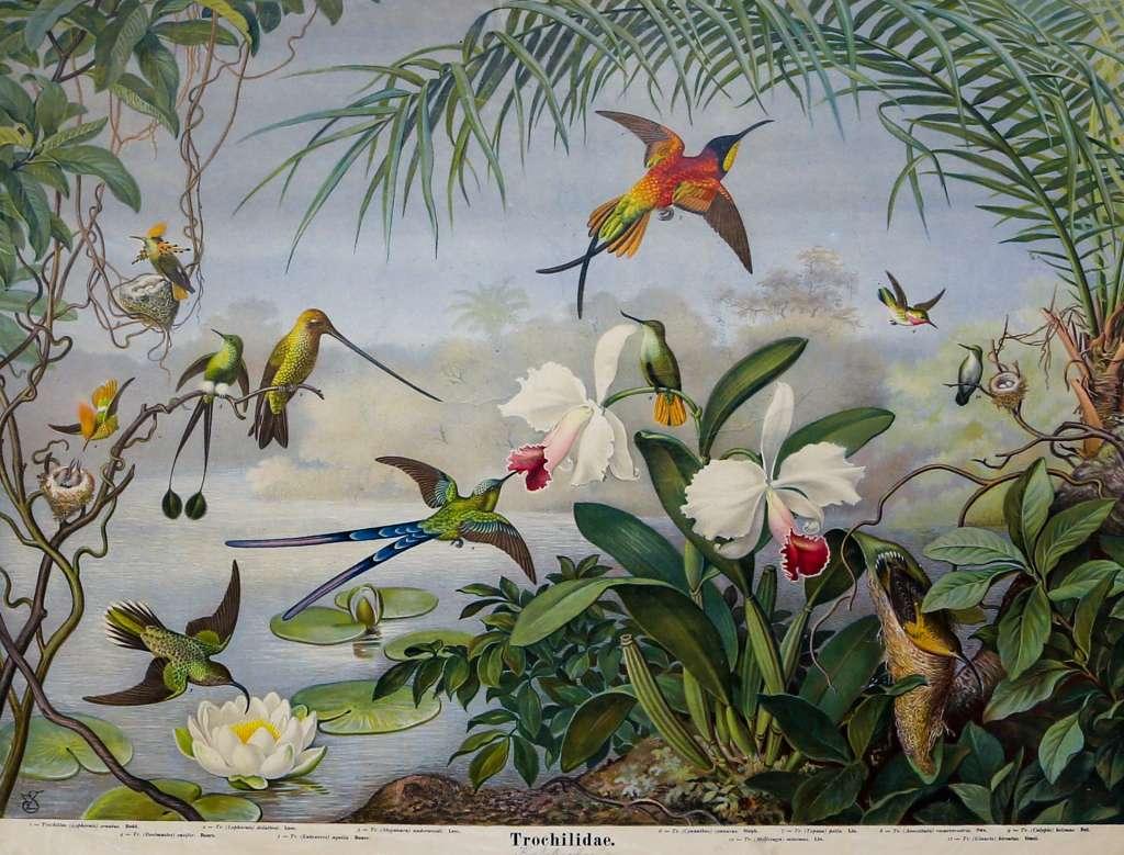 Kolibrit, Kuurojen museo