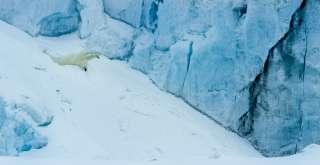 Jääkarhu jäätiköllä