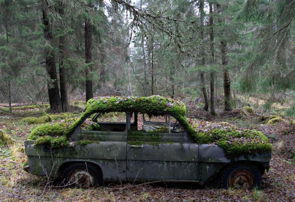 sammaloitunut auto metsässä